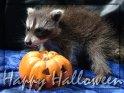 Happy Halloween    Dieses Motiv findet sich seit dem 29. Oktober 2007 in der Kategorie Halloweenkarten.