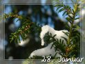 28. Januar    Dieses Motiv findet sich seit dem 29. Dezember 2007 in der Kategorie Tageskarten Januar.