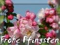 Frohe Pfingsten    Dieses Kartenmotiv ist seit dem 26. Mai 2007 in der Kategorie Pfingsten .