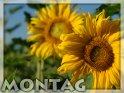 Montagskarte mit Sonnenblumen