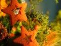 Weihnachtliche Sterne    Dieses Motiv finden Sie seit dem 16. November 2007 in der Kategorie Weihnachtsbilder.