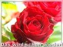 Das wird schon wieder!  Grusskarte mit roter Rose