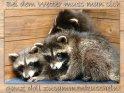 Wetterkritische Grußkarte mit dem Spruch:  Bei dem Wetter muss man sich ganz doll zusammenkuscheln!  Passend dazu kuscheln sich auf dem Bild drei junge Waschbären zusammen.