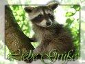 Liebe Grüße  Grusskarte mit einem jungen Waschbär auf einem Baum
