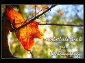 Herbstliche Grüße zum Wochenanfang    Dieses Motiv befindet sich seit dem 14. Oktober 2007 in der Kategorie Montag.