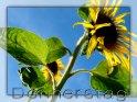 Grusskarte zum Donnerstag mit einer Sonnenblume