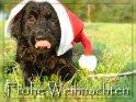 Frohe Weihnachten    Dieses Kartenmotiv ist seit dem 30. August 2007 in der Kategorie Weihnachtskarten.