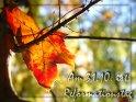 Am 31.10. ist Reformationstag    Aus der Kategorie Reformationstag (31.10 in D&Ö)