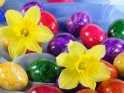 Narzissen umgeben von gefärbten Ostereiern