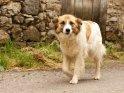 Hund beim Morgenspaziergang durch ein spanisches Bergdorf