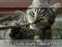 Motiv dieser Geburtstagskarte ist eine Katze, die mit einem  Stock spielt. Der Text dazu: Alles Gute zum Geburtstag