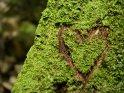 Herz auf einem Moosbedeckten Baumstamm