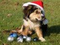 Welpe mit einer Weihnachtsmütze und einem Haufen Weihnachtskugeln