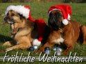 Fröhliche Weihnachten    Dieses Motiv finden Sie seit dem 20. Dezember 2008 in der Kategorie Weihnachtskarten.