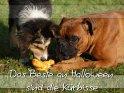 Das Beste an Halloween sind die Kürbisse    Aus der Kategorie Halloweenkarten
