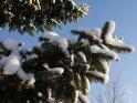 Dieses Foto zeigt einen Ausschnitt von einem mit Schnee bedeckten Tannenbaum