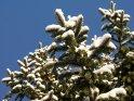 Dieses Motiv finden Sie seit dem 06. Januar 2009 in der Kategorie Schnee.