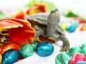 Auf diesem Osterbild läuft eine kleine Schildkröte zwischen Tulpen und Schokoladenostereiern umher.