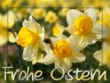 Frohe Ostern    Aus der Kategorie Osterkarten