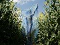 Frau mit blauem Seidentuch in einem Rapsfeld
