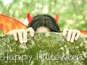 Happy Halloween    Dieses Kartenmotiv wurde am 31. Oktober 2017 neu in die Kategorie Halloweenkarten aufgenommen.