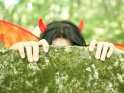 Teufelin versteckt sich hinter einem Felsen
