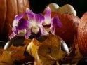 Herbstfoto mit Orchideen, Kürbissen und Herbstblättern