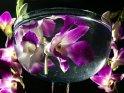 Lila-weiße Orchideen in einer wassergefüllten Glasschale