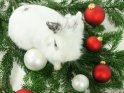 Weißes Kaninchen sitzt auf Tannenzweigen mit roten und weißen Kugeln.