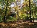 Herbstlandschaft mit einer kleinen Brücke in der Mitte