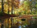 Teich in einer farbenfrohen Herbstlandschaft. Die herbstliche Färbung der umgebenden Bäume spiegelt sich im Wasser.