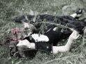 Foto einer Frau im Gothic-Outfit, die auf einer Wiese liegt und an einer Rose riecht.