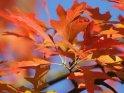 Dieses Kartenmotiv wurde am 22. September 2010 neu in die Kategorie Herbstfotos aufgenommen.