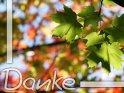 Herbstliche Dankekarte    Dieses Kartenmotiv wurde am 22. September 2010 neu in die Kategorie Danke aufgenommen.
