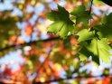 Dieses Motiv finden Sie seit dem 22. September 2010 in der Kategorie Herbstfotos.