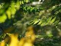 Dieses Motiv befindet sich seit dem 22. September 2010 in der Kategorie Herbstfotos.