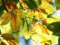 Dieses Motiv findet sich seit dem 22. September 2010 in der Kategorie Herbstfotos.
