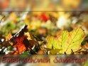 Herbstliche Grußkarte zum Samstag