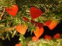 Rote an einem Weihnachtsbaum hängende Herzen
