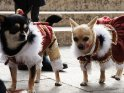Zwei Hunde im Karnevalskostüm beim Karneval in Venedig