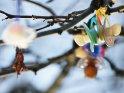 Anz Zweigen hängende Schnuller