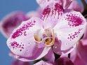 Dieses Motiv wurde am 21. Juli 2011 in die Kategorie Orchideen eingefügt.