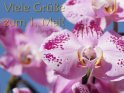 Viele Grüße zum 1. Mai!    Dieses Kartenmotiv ist seit dem 29. April 2011 in der Kategorie Erster Mai.
