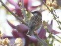Dieses Motiv finden Sie seit dem 19. Juli 2011 in der Kategorie Vögel.