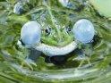 Foto von einem Frosch mit aufgeblasenen Backen