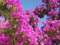 Aus der Kategorie Blumen & Blüten auf Korfu