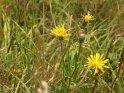 Dieses Kartenmotiv ist seit dem 24. August 2013 in der Kategorie Blumen im Berner Oberland.