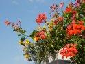 Dieses Motiv findet sich seit dem 15. Februar 2012 in der Kategorie Blumen im Berner Oberland.