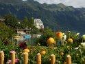 Dieses Motiv finden Sie seit dem 28. Oktober 2011 in der Kategorie Blumen im Berner Oberland.