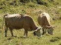 Aus der Kategorie Tiere im Berner Oberland
